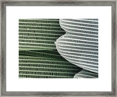 Butterfly Wing Scales Framed Print by Petr Jan Juracka