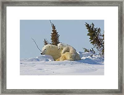 Canada, Manitoba, Wapusk National Park Framed Print by Jaynes Gallery