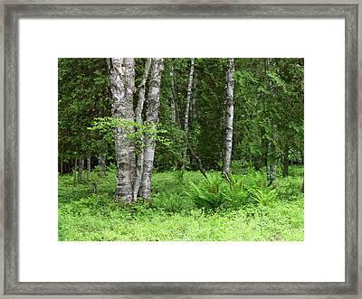 Canada, New Brunswick Framed Print