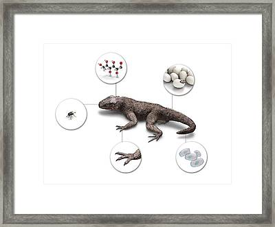 Characteristics Of Life Framed Print