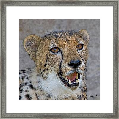 Cheetah Portrait Framed Print by Larry Linton