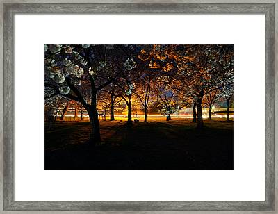 Cherry Blossoms At Night Framed Print
