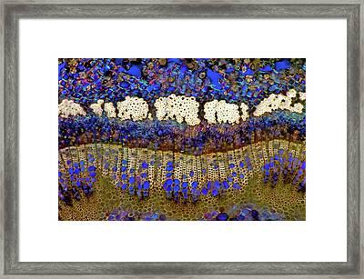 Cherry Tree Stem Framed Print by Marek Mis