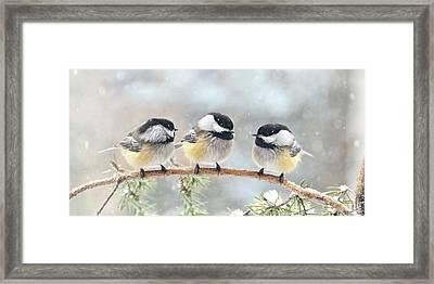 3 Chickadees On A Snowy Day Framed Print