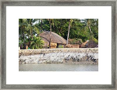Coastal Flood Defences In The Sunderbans Framed Print by Ashley Cooper