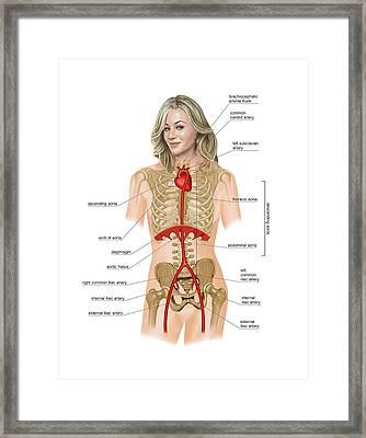Coeliac Trunk Framed Print by Asklepios Medical Atlas