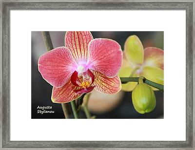 Colourful Orchid Framed Print