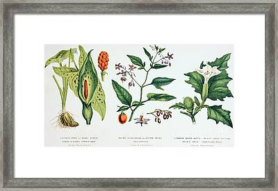 Common Poisonous Plants Framed Print by English School
