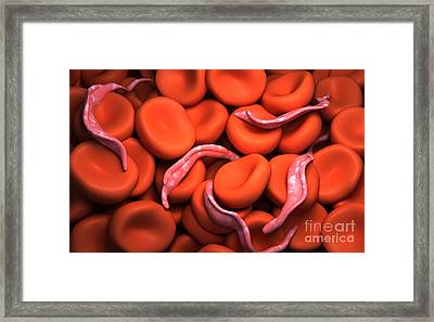 Conceptual Image Of Trypanosoma Framed Print by Stocktrek Images