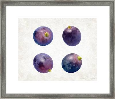 Concord Grapes Framed Print by Danny Smythe