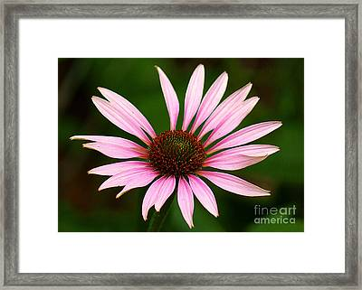 Framed Print featuring the photograph Coneflower - Echinacea by Lisa L Silva