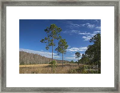 Corkscrew Swamp Framed Print