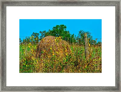 Country Fence Framed Print by Brian Stevens