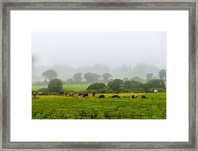 Cows At Rest Framed Print