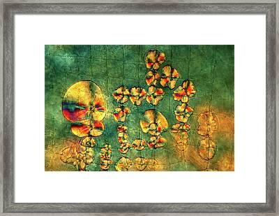 Crystals On Waterflea Framed Print