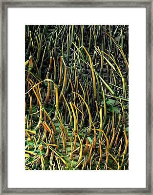 Cucumber Leaf Trichomes Framed Print by Stefan Diller