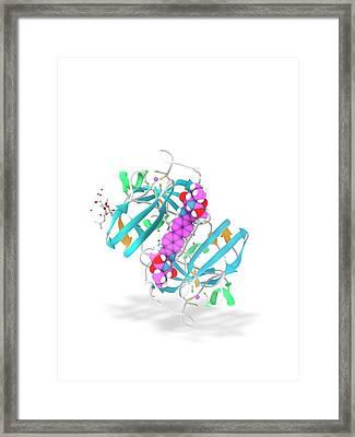 Daclatasvir And Ns5a Protein Complex Framed Print