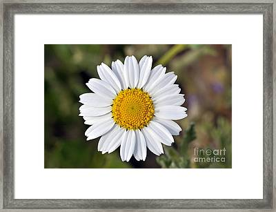 Framed Print featuring the photograph Daisy Flower by George Atsametakis