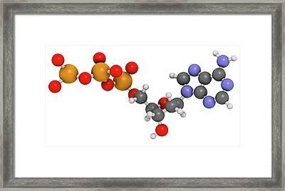 Deoxyadenosine Triphosphate Molecule Framed Print by Molekuul