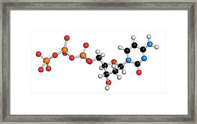 Deoxycytidine Triphosphate Molecule Framed Print by Molekuul