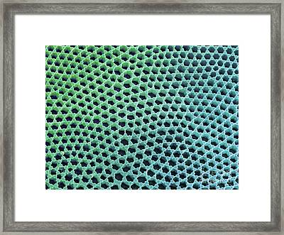 Diatom Cell Wall, Sem Framed Print by Steve Gschmeissner