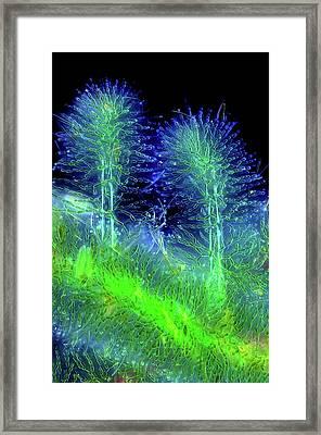 Diatoms On Red Algae Framed Print