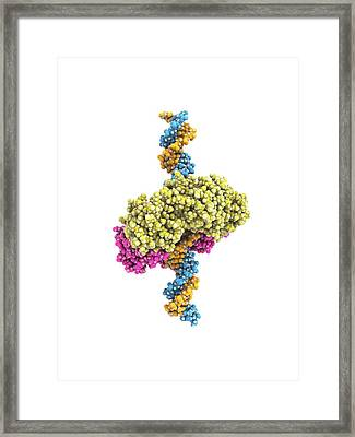 Dna Clamp Framed Print