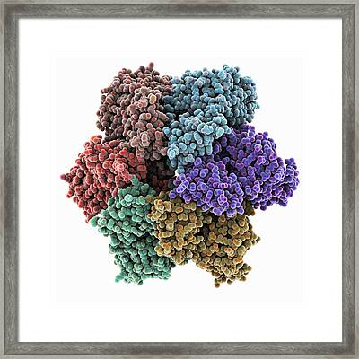 Dna Helicase Molecule Framed Print by Science Photo Library