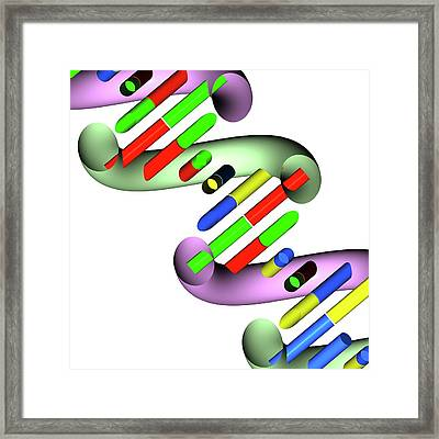 Dna Molecule Framed Print by Russell Kightley