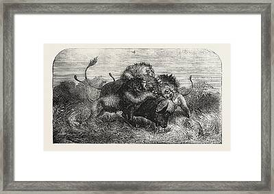 Dr. Livingstones Missionary Travels And Researchers Framed Print