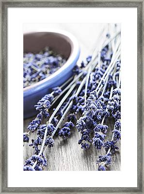Dried Lavender Framed Print