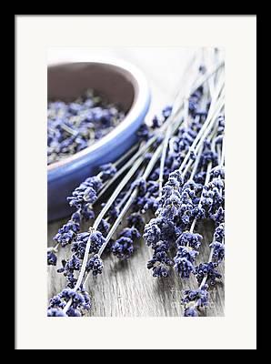 Lavender Framed Prints