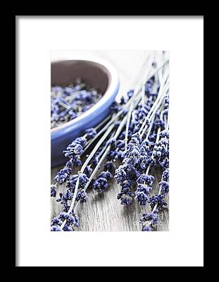 Lavender Framed Prints