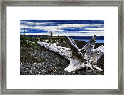 Driftwood On Beach Framed Print by Thomas R Fletcher