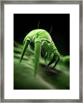 Dust Mite Framed Print by Sebastian Kaulitzki