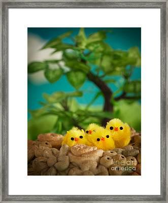 Easter Chicks Framed Print by Mythja  Photography