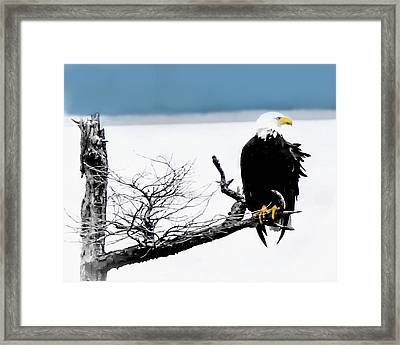 Elegance In The Morning Framed Print