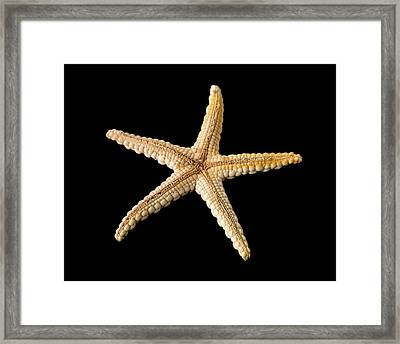 Elegant Starfish Framed Print by Natural History Museum, London