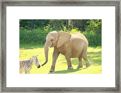 Elephant Framed Print by Tinjoe Mbugus