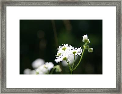 Framed Print featuring the photograph Enlightened  by Neal Eslinger