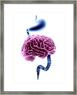 Enteric Nervous System Framed Print