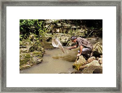 Entomology Field Research Framed Print