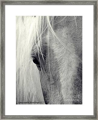 Equine Study Framed Print