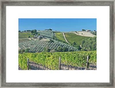 Europe, Italy, Umbria, Near Montefalco Framed Print