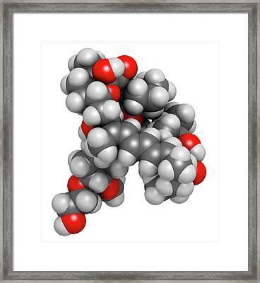 Everolimus Immunosuppressant Molecule Framed Print by Molekuul
