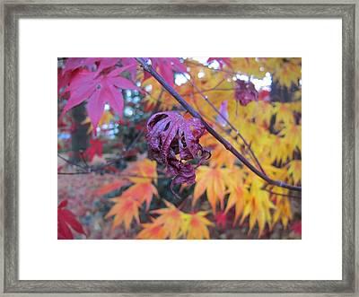 Fall Splendor  Framed Print by Valia Bradshaw