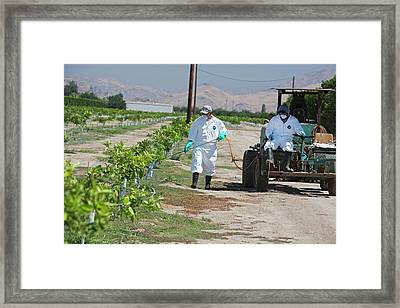 Farm Workers Applying Pesticide Framed Print