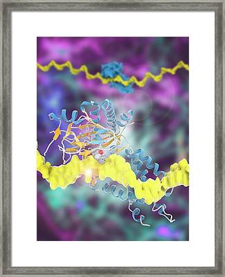 Fat Mass And Obesity-associated Protein Framed Print by Ramon Andrade 3dciencia