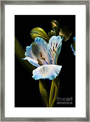 Flower Framed Print by Gunnar Orn Arnason
