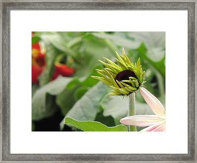 Flower Series Framed Print